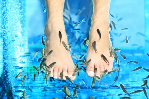 Fish massage | Lucky Bansko SPA & Relax