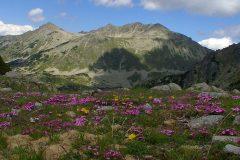 Park areas in Pirin mountain