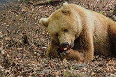 Trip to Belitsa Park | Lucky Bansko