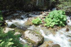 The Bistritsa River in the Pirin Mountains