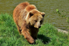 The city of dancing bears Belitsa
